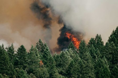 Canadians can now apply for funding to build wildfire resiliency in their community