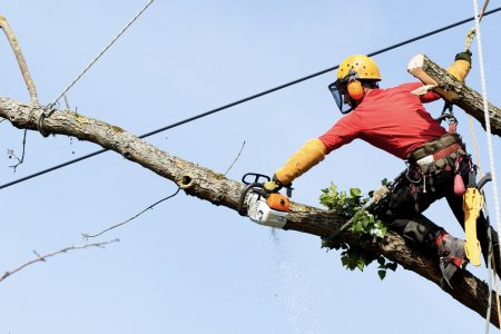 IBM to Help Utilities Cut Tree Trimming Budgets and Reduce Outages
