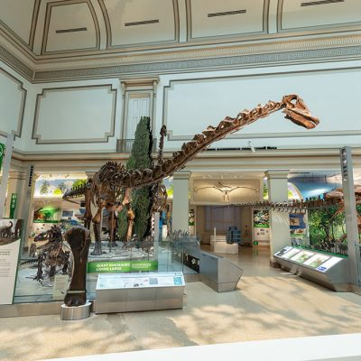 Smithsonian National Museum of Natural History's Dinosaur Hall Restored to its Original Grandeur