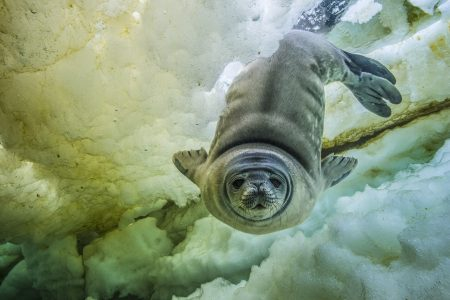 Antarctic Environmental Community Echoes Global Demand for Climate Action