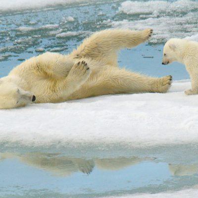 International Polar Bear Day Spreads Awareness of Polar Bear Conservation and the Dire Threat of Habitat Loss