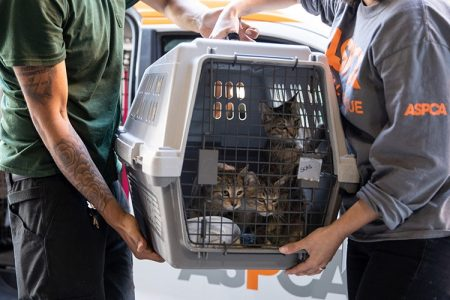 ASPCA and Wings of Rescue Fly Nearly 200 Homeless Animals in the Path of Hurricane Dorian to Safety
