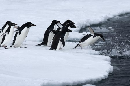 Backlog of Antarctic Marine Protected Areas Blocking Promised Network