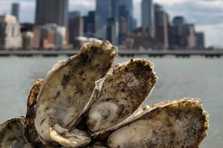 Moët Hennessy USA Partners with Billion Oyster Project to Help Restore Oyster Reefs in New York Harbor