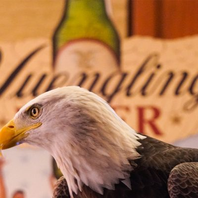 Yuengling Partners With American Eagle Foundation To Protect U.S. National Symbol