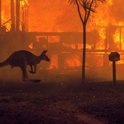 Governments, Smart Data and Wildfires: Where Are We at?