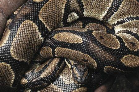 Global Reptile Trade Creates Enormous Suffering, Cruelty and a Hotbed of Disease