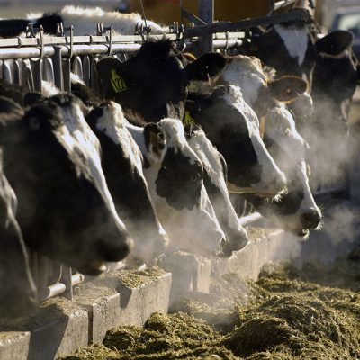 Meat Industry Faces Ruin if Slow to Adapt to Climate Change