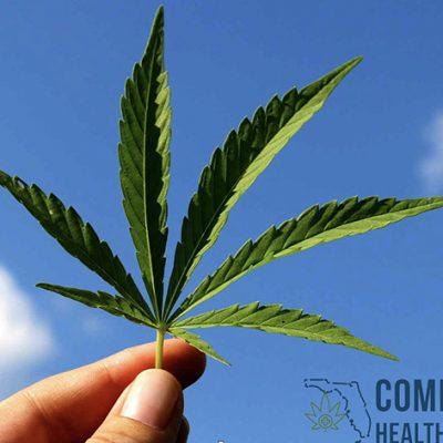 Expanding Access to Legal Medical Marijuana in Florida