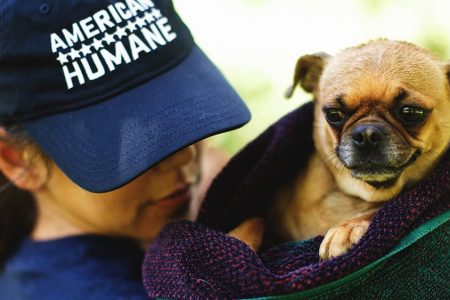 American Humane Challenges Political Campaigns to Include Animal Policies in Platforms