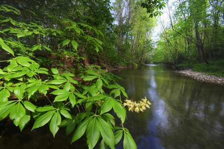 Honda Helps Protect Big Darby Nature Preserve with 90-acre Land Donation