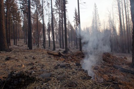 California Cattlemen's Association and Others Request $1.5 Billion in Funding, Regulatory Changes to Battle Increasing Blazes