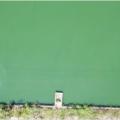 Innovative Solution Against Toxic Algae Has Been Approved for Commercial Use in California