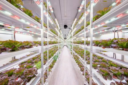 AmplifiedAg Deploys Vertical Farms and Hydroponic Systems, Positioning Company for Rapid Expansion