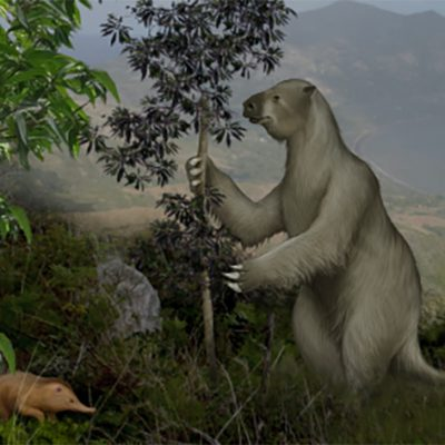New Study Sheds Light on Caribbean Mammal Extinctions, Helps Guide Conservation Strategies