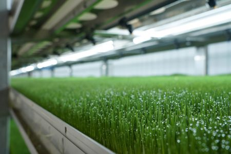 University Research Confirms Greenhouse Gas Reductions Using HydroGreen's Hydroponic Fodder System