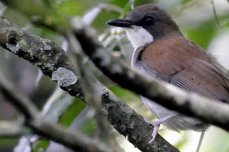 Warming Climate Slows Tropical Birds' Population Growth Rates