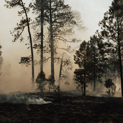 Burning the Forest, Not Just the Trees