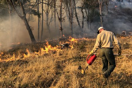 For Over 100 Years Fire Suppression Policies Have Led to a Dangerous Build-Up of Brush and Unhealthy Trees