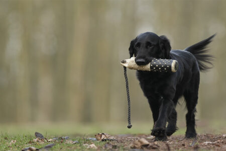 How to Train Your Dog?