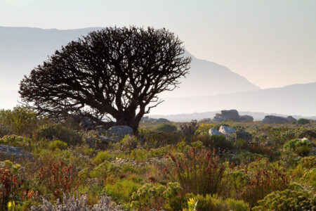 Field Biologists and NASA Planes to Map Biodiversity in South Africa's Greater Cape Floristic Region