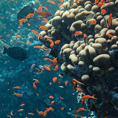 Actions in Coming Decade Will Determine Whether Coral Reefs Survive