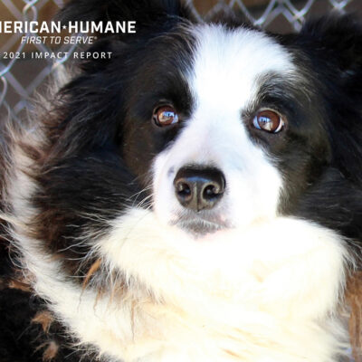 Report Details American Humane's Global Efforts in Protecting World's Animals During Pandemic Year