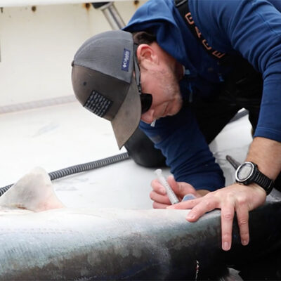 Shark Week 2021: How Large Marine Predators Use the Twilight Zone to Thrive, and Survive