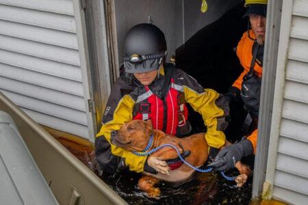 American Humane Rescue Team Rushing to Evacuate Animals Caught in Path of Hurricane Ida