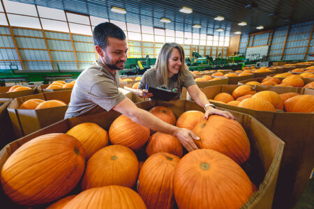 Meijer Strengthens Commitment to Local, Offers Freshest Pumpkin Assortment for Halloween