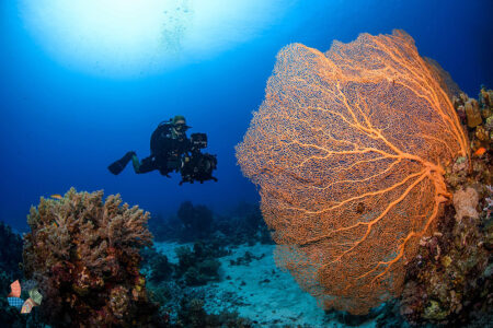 Red Sea Expedition Reveals Deep Sea Mysteries and an Ecological Treasure Trove